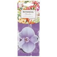 Botanic garden - purple orchid